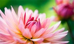 Amanda D'Arcy flowers image