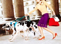 Chris Craymer photography dalmatians image