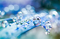 Colleen Slater droplets image