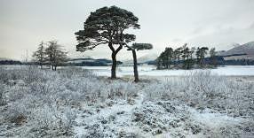 Julian Calverley snow image